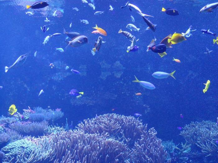 aquário5